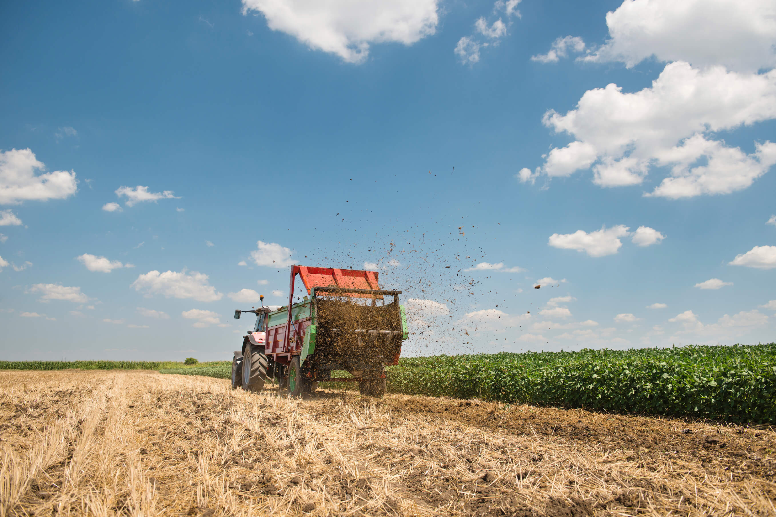 Image: Manure spreader working in field of harvested wheat